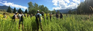 Learning the planning process for wetland restoration