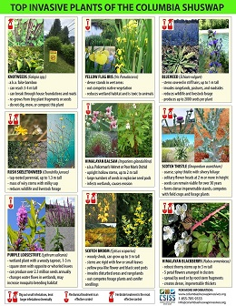 Top 14 poster Page 1 Very Small