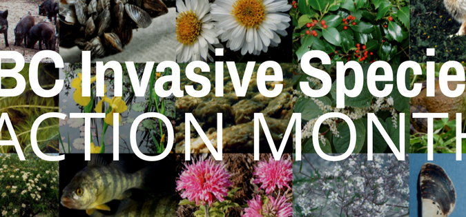 May is Invasive Species Action Month!