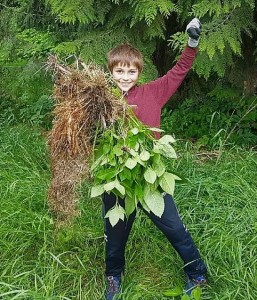 Happy to have removed Himalayan Balsam from near the Selkirk Saddle Club grounds!