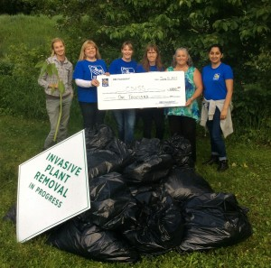 Members of RBC Revelstoke helped pull Himalayan Balsam